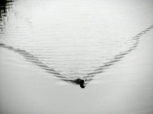 MOVEMENT: One early morning, a bird made a drawing on the water.