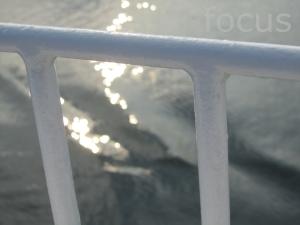 IMG_2870-focus